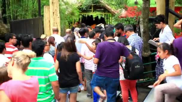 THAILAND, BANGKOK, 5 AUGUST 2014, people on the show animals at zoo. HD. 1920x1080