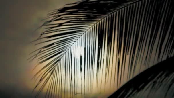 Noc v tropech s Palmou a úplněk.