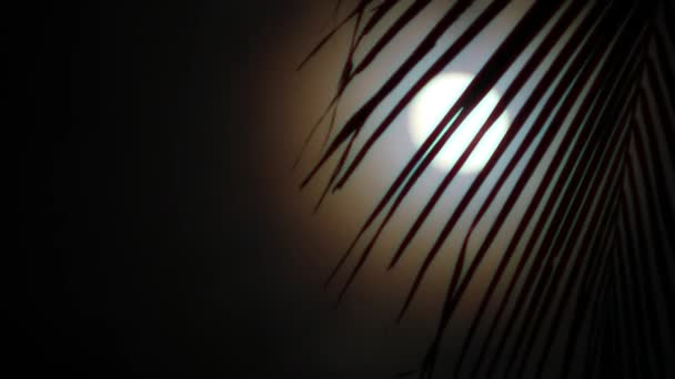 Night in tropics with palm tree and full moon.