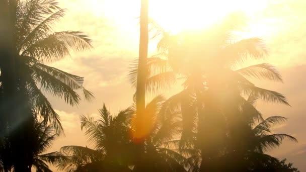 tropických palem na zlatém nebi slunce