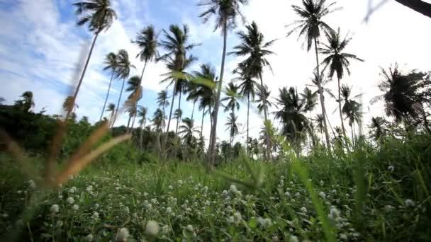 fák pálmaliget kék ég háttér Koh Samui. Thaiföld. HD. 1920 x 1080