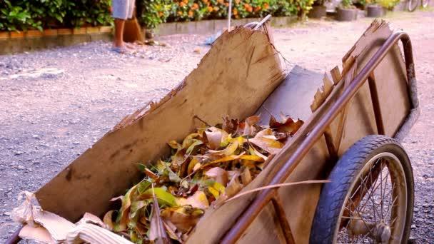 Školník s zametací koště spadané listí a hází v košíku. Video