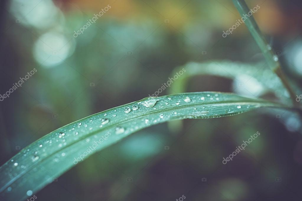 Water drops on the grass in retro colors. Macro shoot