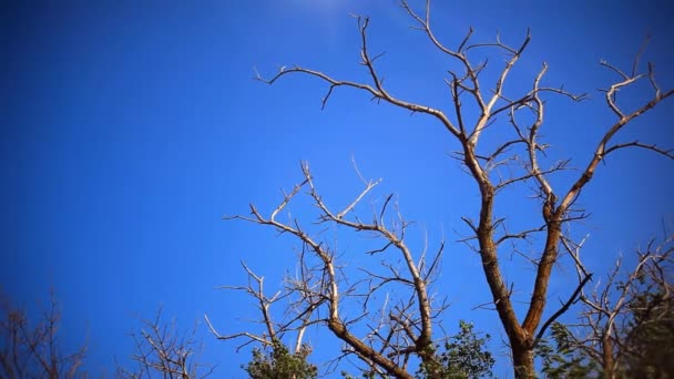 Dead dry branches of a tree in a field against the sky and the remains of living leaves swaying in the wind