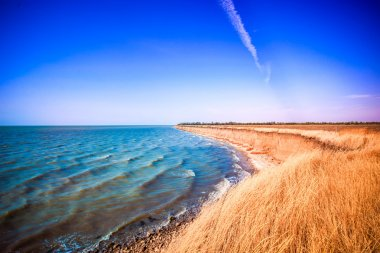Empty beach in the sea bay spikelets