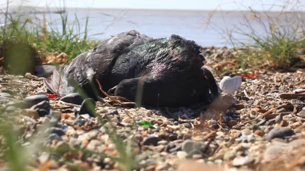 flies fly around dead birds on the shore dirty pebble beach