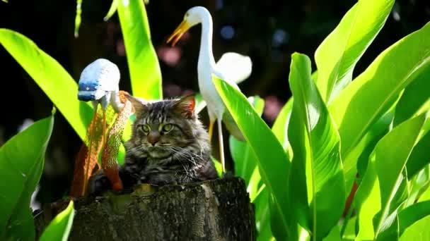 Zamyšlený Maine Coon kočka sedí na pařezu