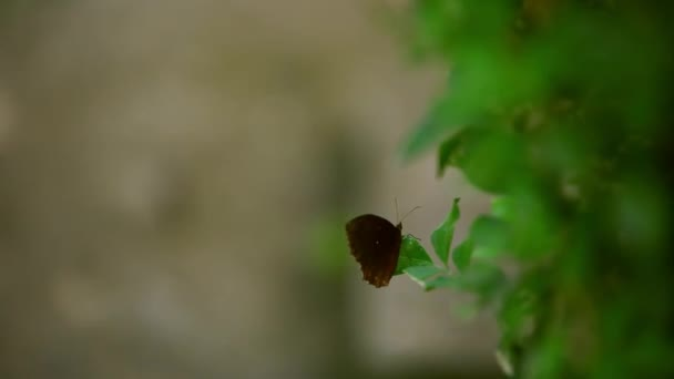 A brown butterfly sitting on the leaf of a plant. butterfly spreads its wings