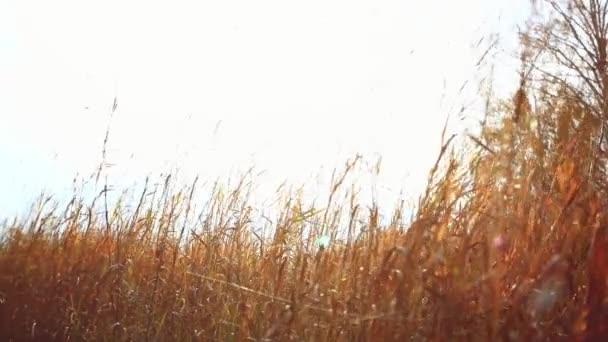Fiatal nőt, sétál a mező, a háttérben a napfény