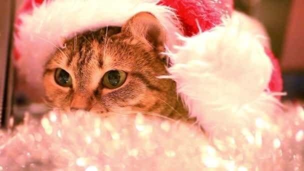 macska, Mikulás sapkát és karácsonyi talmi.