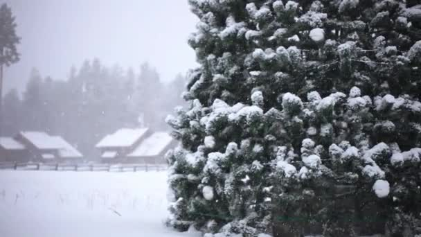 Téli fák, hegyek hóval friss havazás és az előtérben egy csillag a karácsonyfa alatt