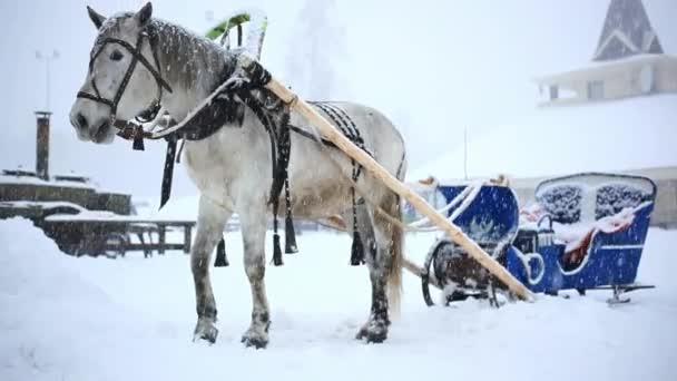 téli meleg karácsony napján-nagy havazás során hasznosítani ló