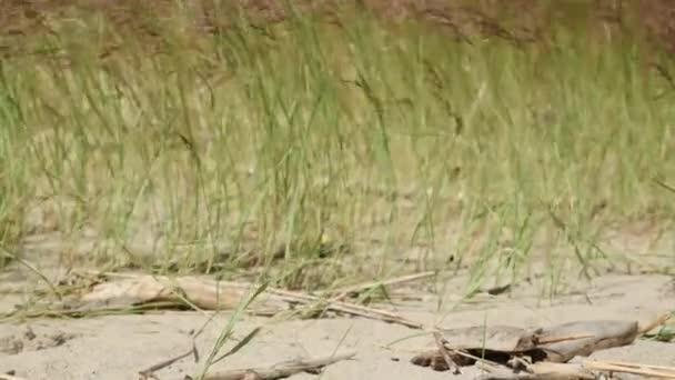 Duna trávy s dům na pláži v zaměření změny vzdálenosti od rozmazané