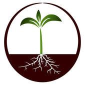 Növekvő növény - illusztráció