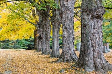 Autumn Graveyard in New England