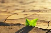 növénytermesztés keresztül száraz repedezett a talaj
