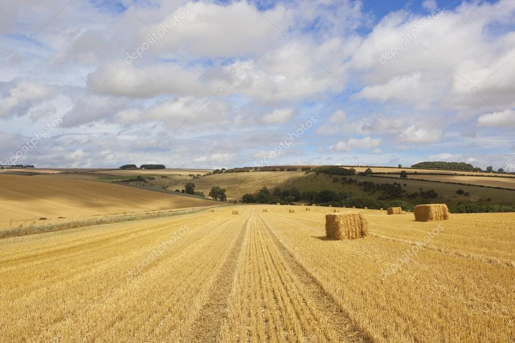 Stubble Fields And Straw Bales In Summertime Stock Photo