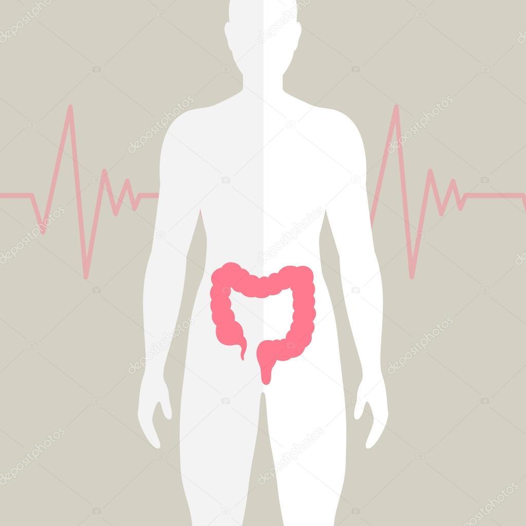 intestino humano Vector — Archivo Imágenes Vectoriales ...