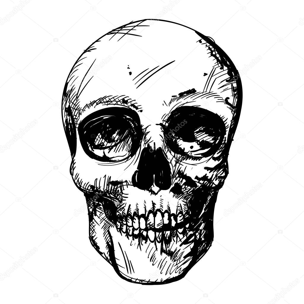 vector illustration of a black and white human skull drawing vector by ramonakaulitzki