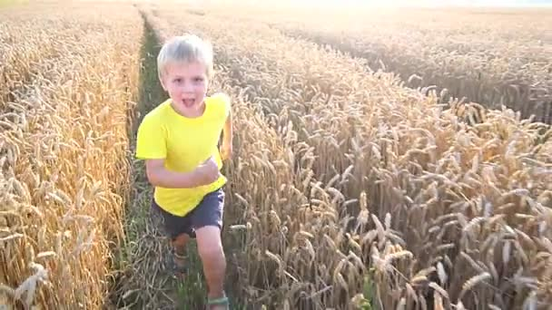 Kleiner Junge spielt im Weizenfeld