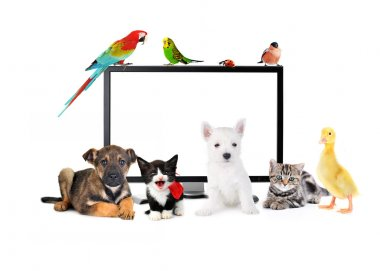Cute animals near LCD Monitor