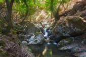 Valle delle farfalle, una riserva naturale. Isola di Rodi. Grecia