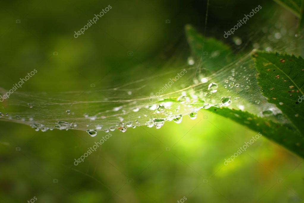 Rain drops on cobweb