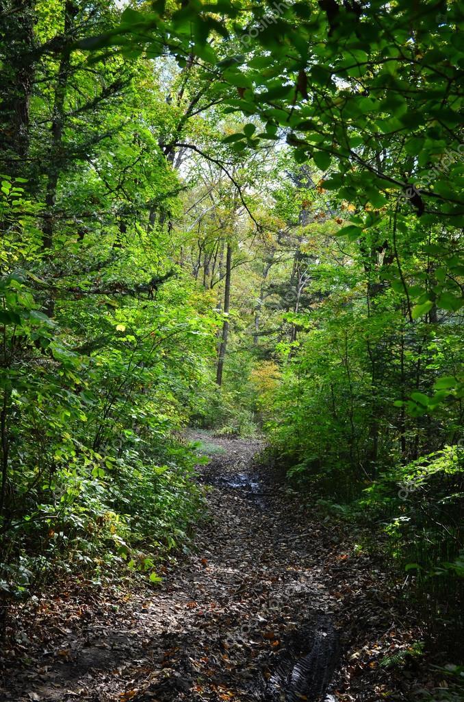 Фотообои Forest trail, Primorye, Russia