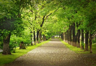 Park way, spring blooming, green alley