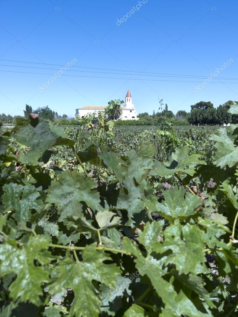 Wine industry in Chile