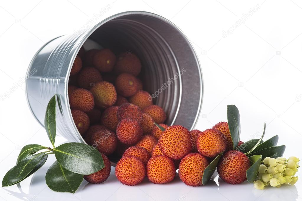 Bucket with arbutus unedo fruits over white