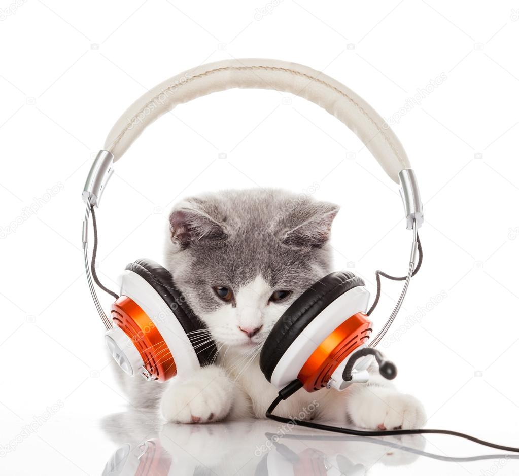 Cute kitten and headphones. Young cat is listening to ...