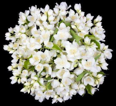 Circle  from white  jasmine flowers
