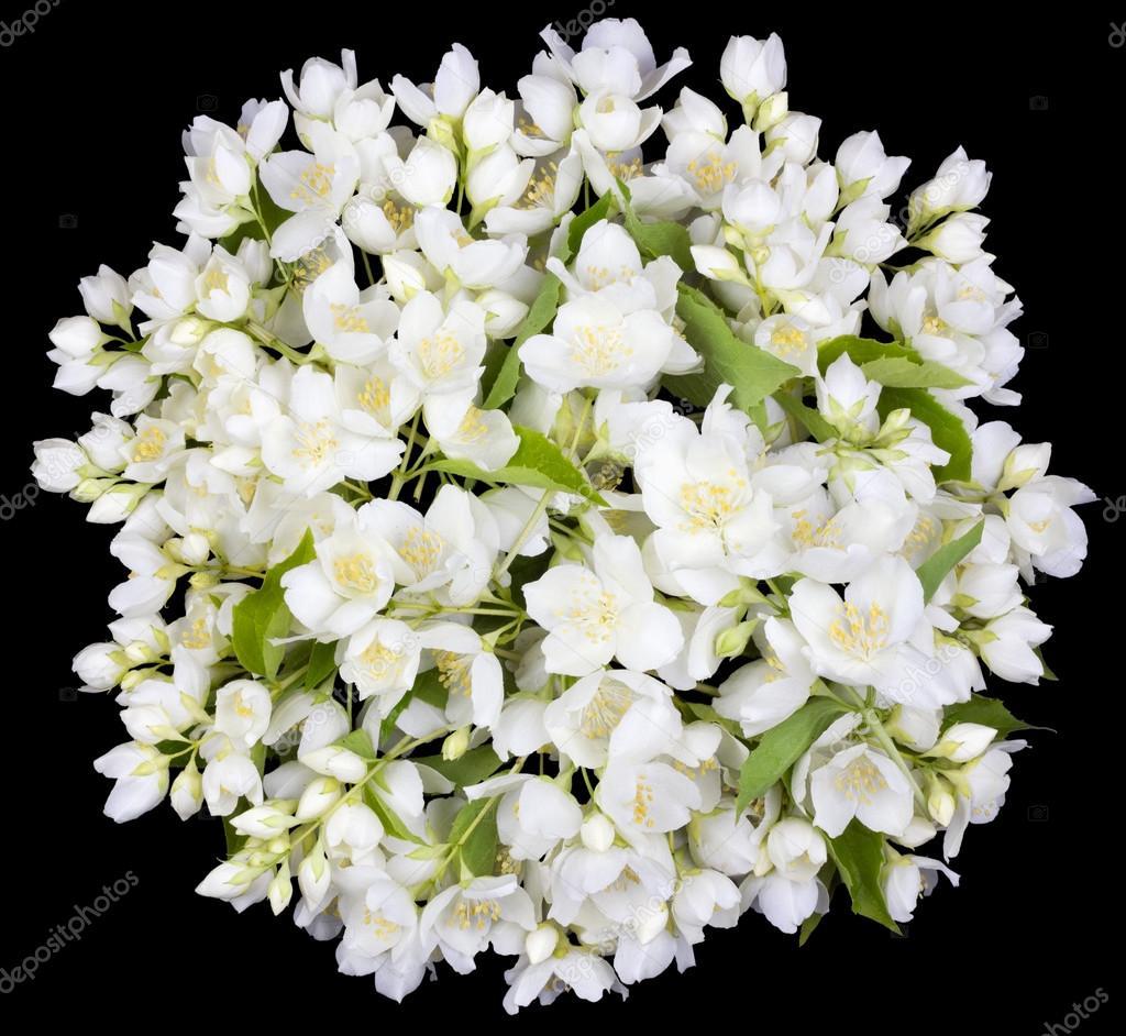 Circle from white jasmine flowers stock photo vilaxlt 77363982 circle from white jasmine flowers stock photo izmirmasajfo