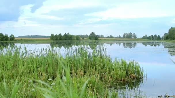 Világos táj: kék víz, és a zöld növényzet, a víz egy nyári reggelen