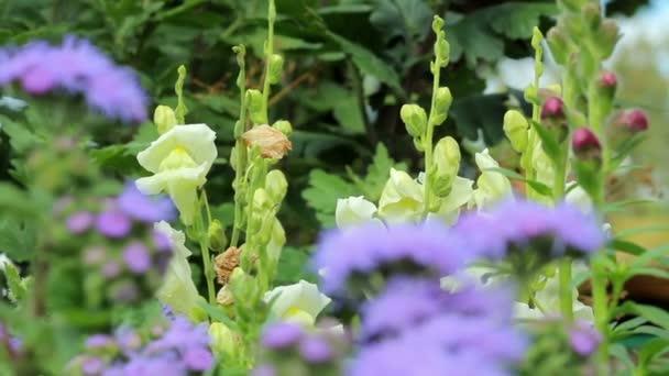 Krásný jarní pozadí s fialovým květy na zahradě