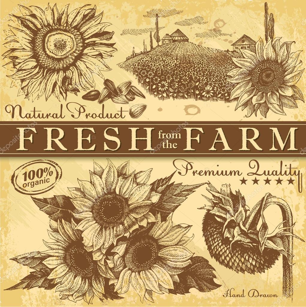 Vintage Sunflowers