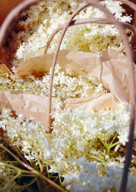 Elderflowers in paper bags