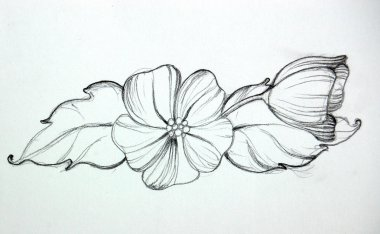 hand drawn flowers,