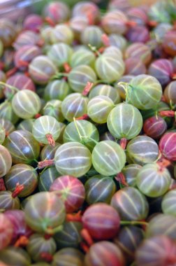 Heap of ripe Gooseberries