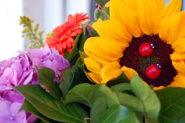 beautiful bouquet of colorful summer flowers