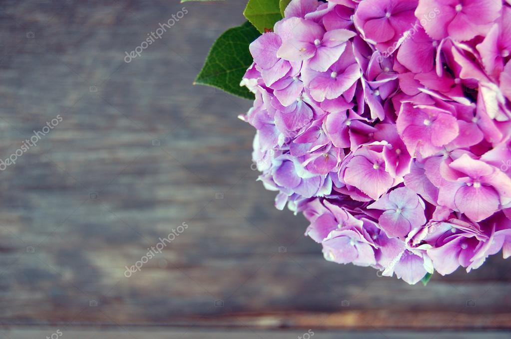 beautiful Hortensia flowers