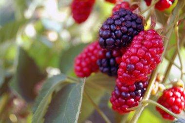 Fresh summer fruit background