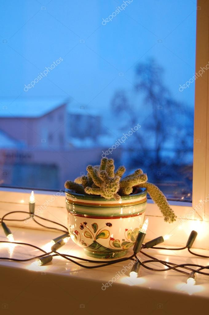 Fenster Weihnachtsbeleuchtung.Kaktus In Blumentopf Im Fenster Mit Weihnachtsbeleuchtung