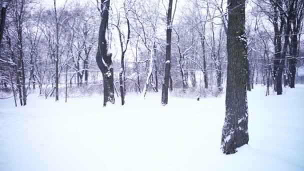 Zimní pohled na městský park
