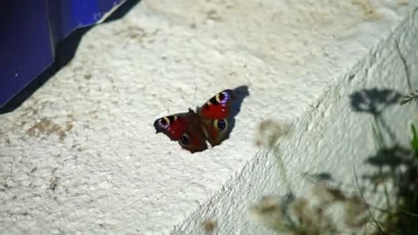 Kleiner Schmetterling auf Beton