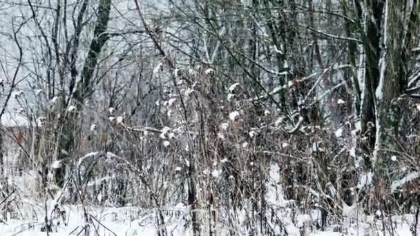 Husté sněžení v zimním lese