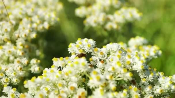 összejövetel Bee pollen