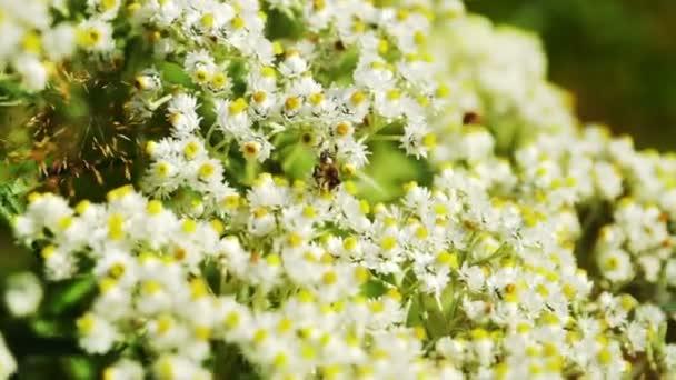 získávání včelího pylu