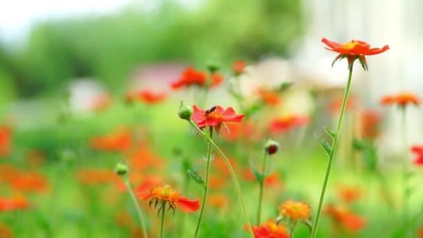 Červené květy kvetoucí v zahradě